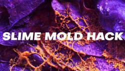 Slime mold hack